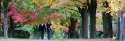 NOTL Trees Urban canopy Volunteers