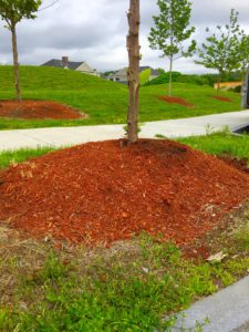 Arbor Day Avoid mulch volcano image
