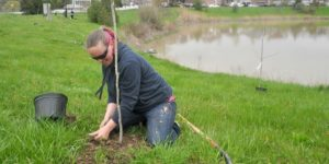 Volunteers plant trees in NOTL