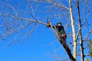 St Catharines tree bylaw